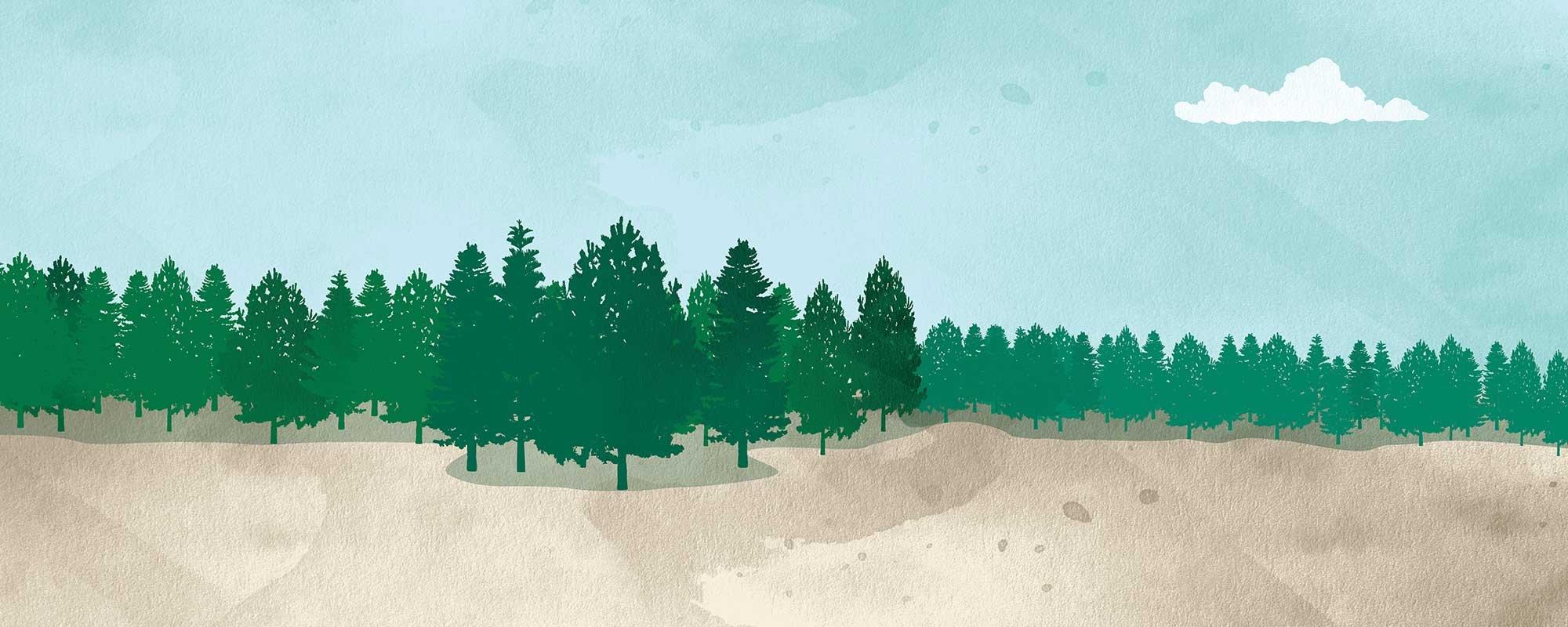 Kuvituskuva piirretty metsämaisema.
